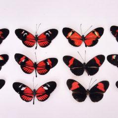 Butterfly Park Benalmadena.Mariposario
