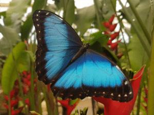 butterfly park benalmadena